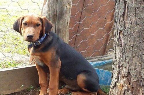 Ορεστιάδα: Υπόθεση με παράνομη διακίνηση 8 κυνηγόσκυλων ερευνά η εισαγγελία