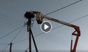 Video: Διάσωση πελαργού στη Νέα Βύσσα από συνεργείο του ΔΕΔΔΗΕ