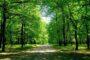 Έβρος: Απαγόρευση κυκλοφορίας στα δάση, λόγω κινδύνου πυρκαγιάς – Περιπολίες και στρατός με αστυνομία