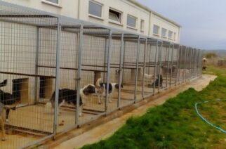 Διδυμότειχο: Χρηματοδότηση για ανέγερση καταφύγιου αδέσποτων ζώων στον δήμο απ' το υπουργείο Εσωτερικών