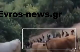 Σουφλί: Συνεχίζουν ανενόχλητοι τις κλοπές και τις… βόλτες οι λαθρομετανάστες στον ορεινό όγκο (ΒΙΝΤΕΟ)