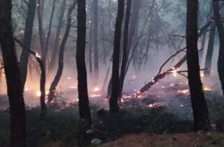 WWF Ελλάς: Από στρατιωτικές δραστηριότητες ξεκίνησε η καταστροφική πυρκαγιά στο δάσος Δαδιάς-Λευκίμμης