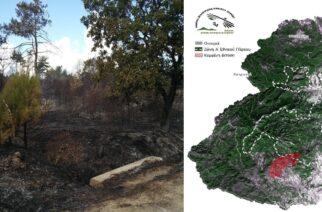 Εθνικό Πάρκο Δάσους Δαδιάς-Λευκίμης: Λειτουργούμε κανονικά. Η αυστηρά προστατευόμενη ζώνη βγήκε αλώβητη απ' την φωτιά