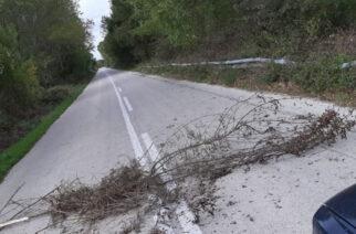 Σουφλί: Τρόμος για επιβάτες αυτοκινήτου – Τους επιτέθηκαν λαθρομετανάστες που έφραξαν το δρόμο με κλαδιά!!!