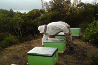 ΄Εβρος: Υποβολή δήλωσης από μελισσοκόμους κατεχόμενων κυψελών –Δράσεις 3.1 και 3.2