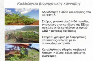 Ορεστιάδα: Σεμινάριο για την καλλιέργεια & μεταποίηση βιομηχανικής κάνναβης απ' τον Σύλλογο Φοιτητών Τμήματος Αγροτικής Ανάπτυξης