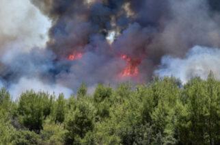 Έβρος: Πολύ δύσκολο καλοκαίρι με 534 πυρκαγιές (υπερδιπλάσιες από πέρυσι) και 19.554 καμένα στρέμματα