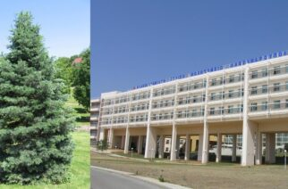 Δήμος Αλεξανδρούπολης: Φωτίζουμε το πρώτο δέντρο στο Πανεπιστημιακό Νοσοκομείο Αλεξανδρούπολης