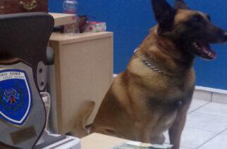 Τρεις συλλήψεις για ναρκωτικά απ' το Λιμενικό με τη βοήθεια σκύλου στην Αλεξανδρούπολη