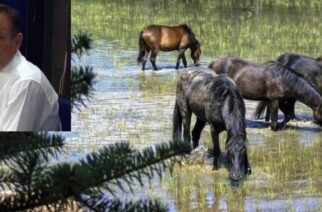 Φέρες: Η πρόταση του Κώστα Αλεξανδρή για τα άγρια άλογα στο Δέλτα του Έβρου