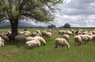 Υποβολή αιτήσεων χωροταξικής ανακατανομής βοσκοτόπων για το 2021, από κτηνοτρόφους της Περιφέρειας ΑΜΘ