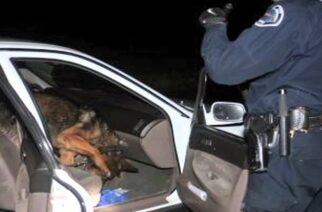Αλεξανδρούπολη: O «Laika»… μύρισε την κοκαίνη (video) που μετέφερε Έλληνας και οι αστυνομικοί τον συνέλαβαν