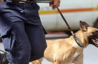 Αλεξανδρούπολη: Ο αστυνομικός σκύλος… μύρισε τα ναρκωτικά που είχαν πάνω τους και συνελήφθησαν