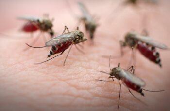 Ξεκινάει σήμερα (δεν είναι Πρωταπριλιάτικο ψέμα) η καταπολέμηση των κουνουπιών στην Περιφέρεια ΑΜΘ