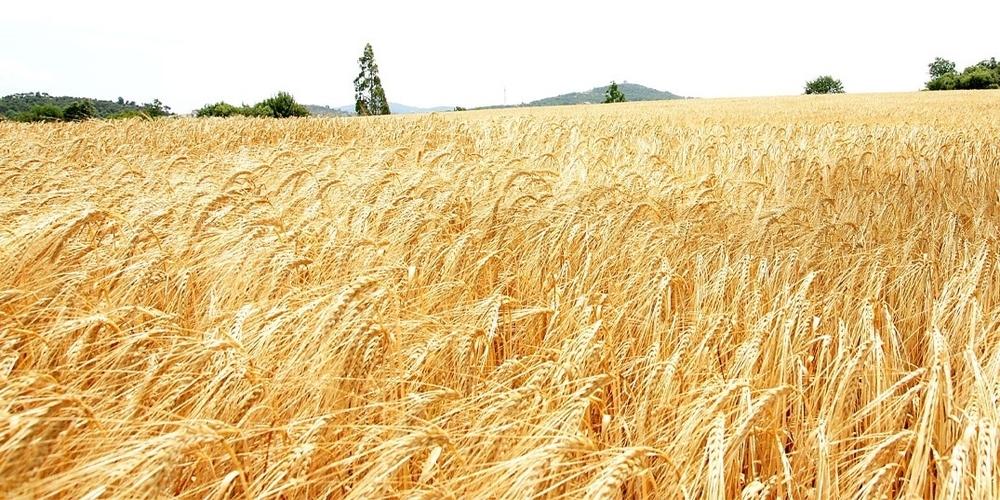 Αγρότες: Ξεκίνησαν στον Έβρο οι δηλώσεις για τις ζημιές από παγετό στις καλλιέργειες