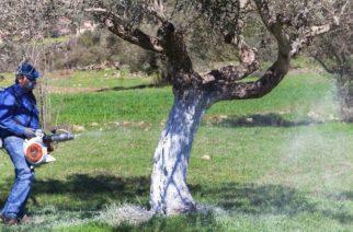Έβρος: Εγκρίθηκε η πρόσληψη 3 γεωπόνων και 52 εργατοτεχνιτών για καταπολέμηση του δάκου