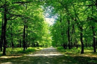 Έβρος: Απαγόρευση παρουσίας ιδιωτών μέσα στα δάση κατά την αντιπυρική περίοδο, με απόφαση Μέτιου