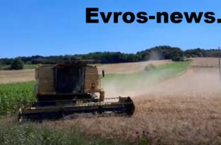 Έβρος: Τελειώνει το αλώνισμα των σιταριών – Καναδάς και ζήτηση ανεβάζουν τις τιμές (ΒΙΝΤΕΟ)