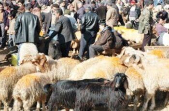 Κτηνιατρική Υπηρεσία: Οδηγίες για τις σφαγές ζώων εν όψει του Κουρμπάν Μπαϊράμ των Μουσουλμάνων