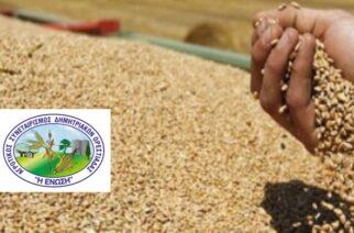 """Πληρώνει τους σποροπαραγωγούς 37,29 λεπτά (με ΦΠΑ) το κιλό, ο Αγροτικός Συνεταιρισμός Ορεστιάδας """"Η ΕΝΩΣΗ"""""""