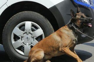 Αλεξανδρούπολη: Τον συνέλαβε για ναρκωτικά το Λιμενικό, με την συνδρομή εκπαιδευμένου σκύλου