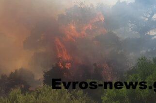 Σουφλί: Αναδασωτέες κηρύχθηκαν οι εκτάσεις που κάηκαν σε Λευκίμη, Κοτρωνιά