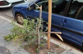 """Ο δήμος Αλεξανδρούπολης ζητάει απ' τους πολίτες να """"καρφώσουν"""" τηλεφωνικά τον """"ανεγκέφαλο"""" που έσπασε δέντρο"""