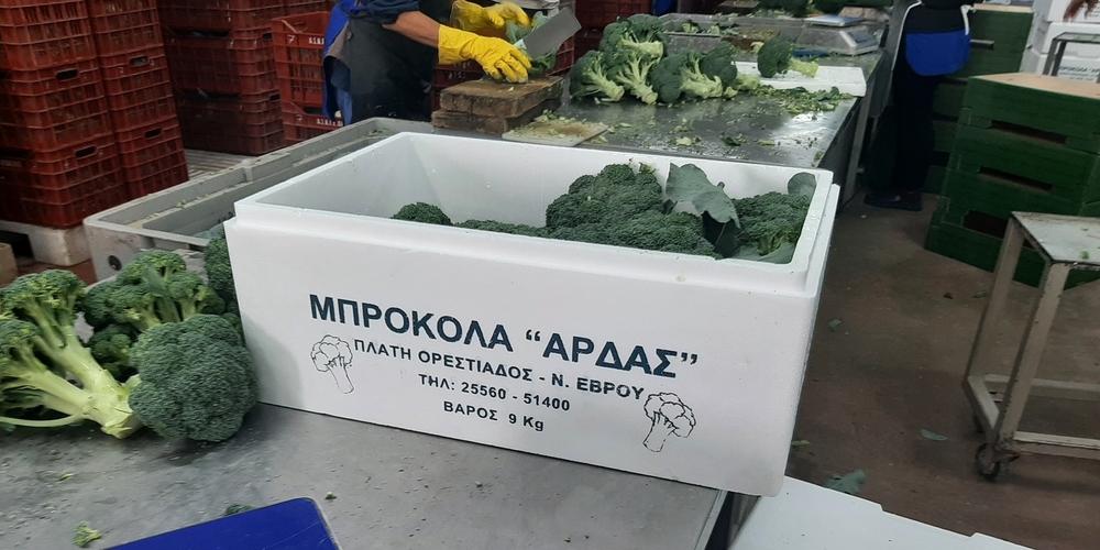 """Τα μπρόκολα του Α.Σ.Κ.Γ.Ε. """"ΑΡΔΑΣ"""", ταξιδεύουν ήδη σε όλη την Ελλάδα"""